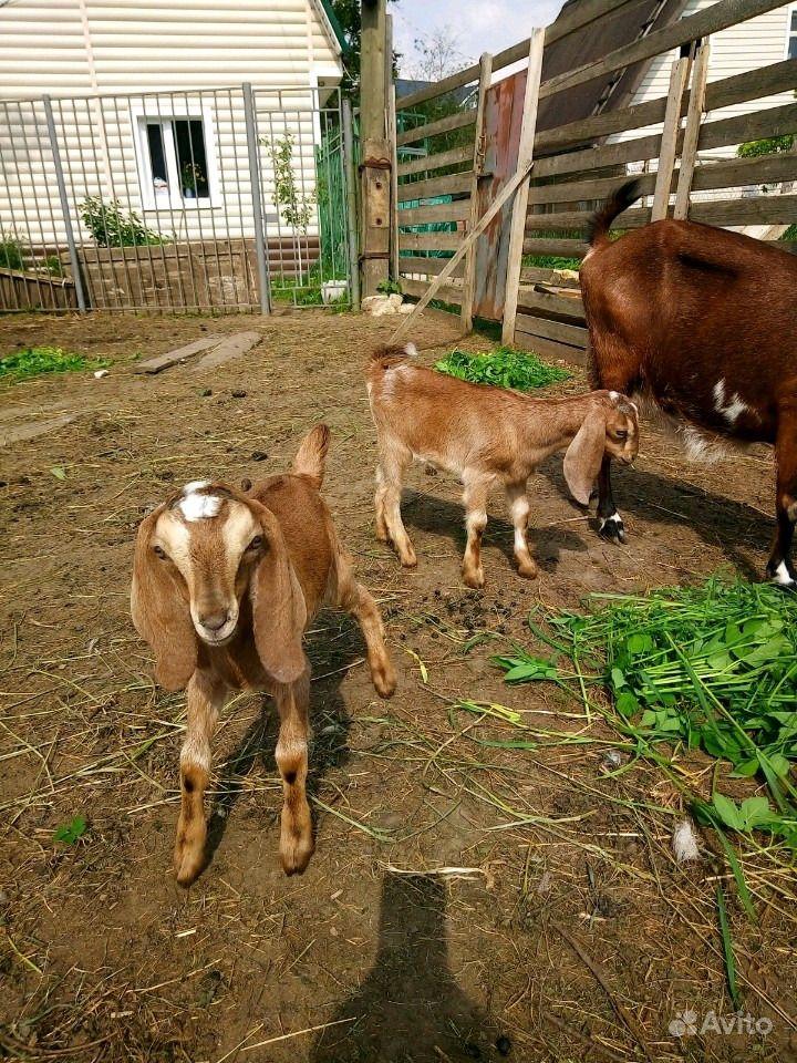 похож сексуальные катрин кози в красном селе онлайн всегда мечтала заняться