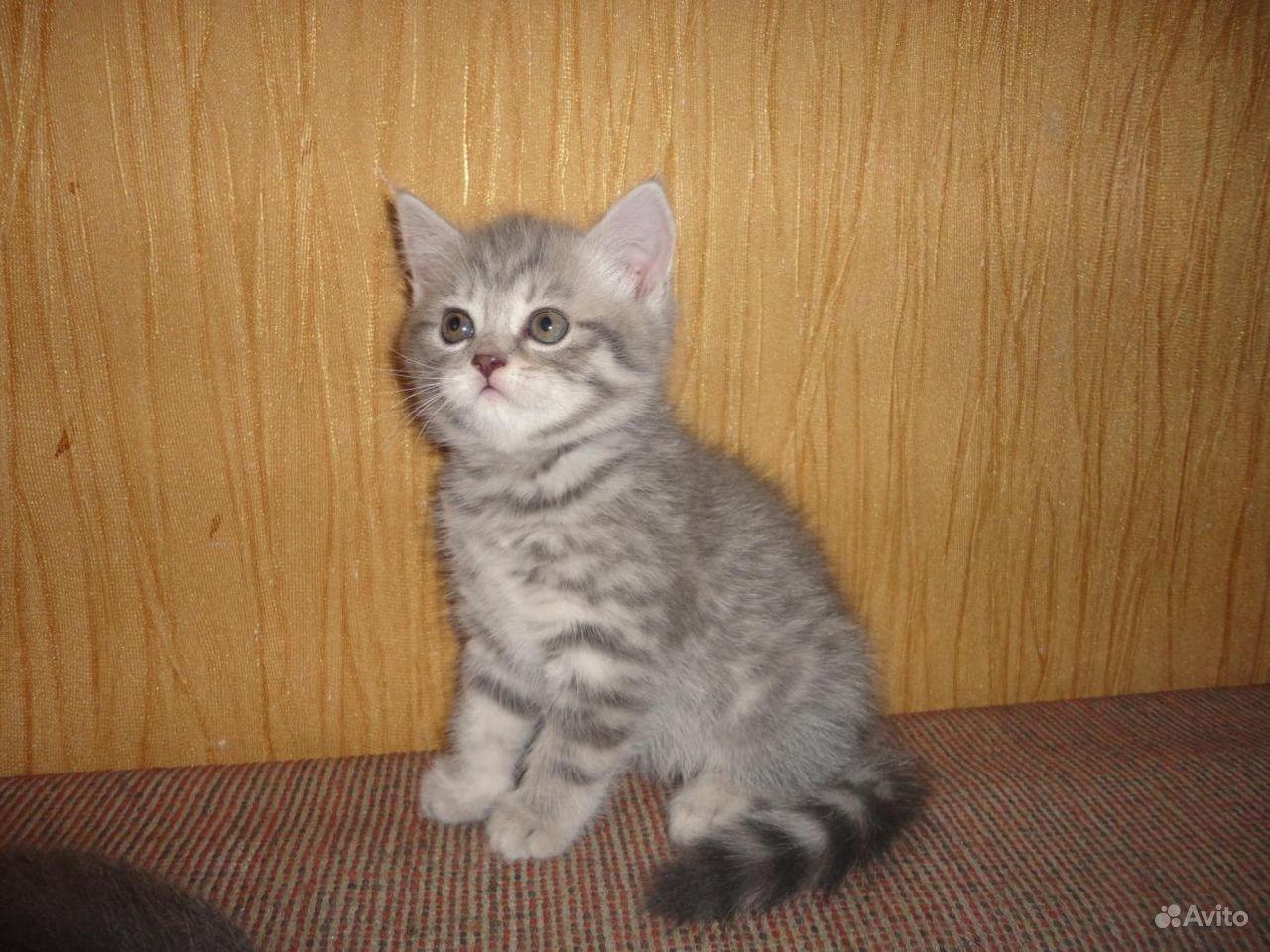 Кошечка 2 месяца в Саранске - фотография № 8