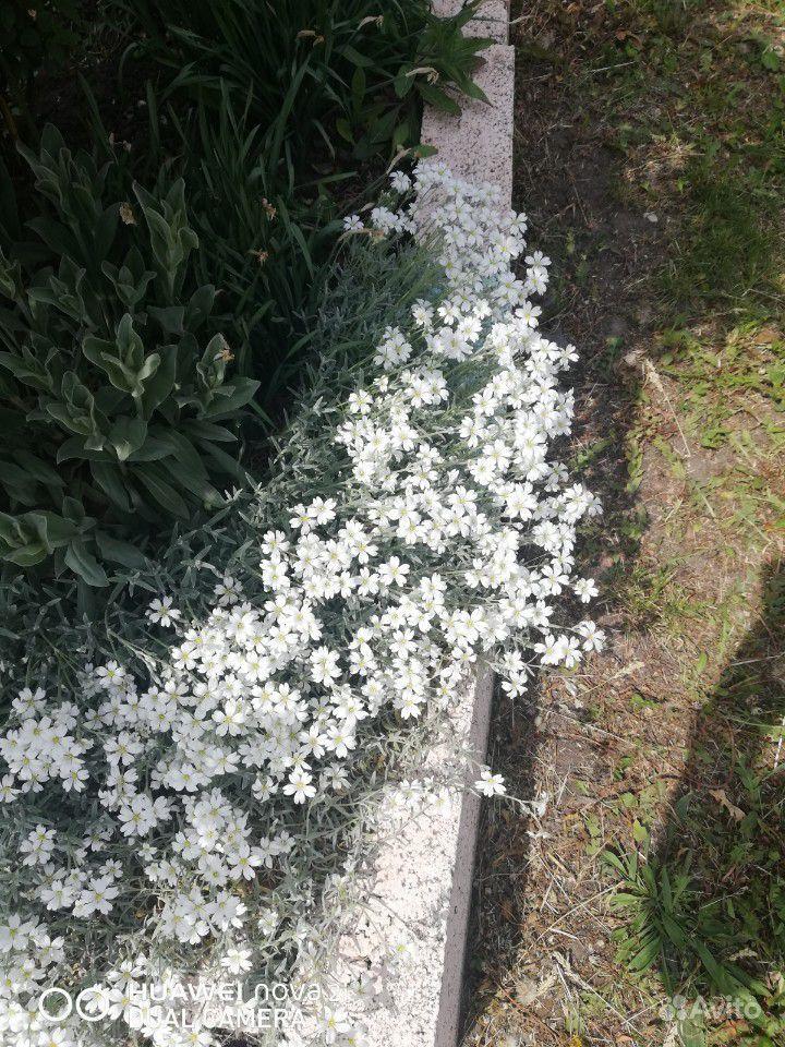 Цветы купить на Зозу.ру - фотография № 1