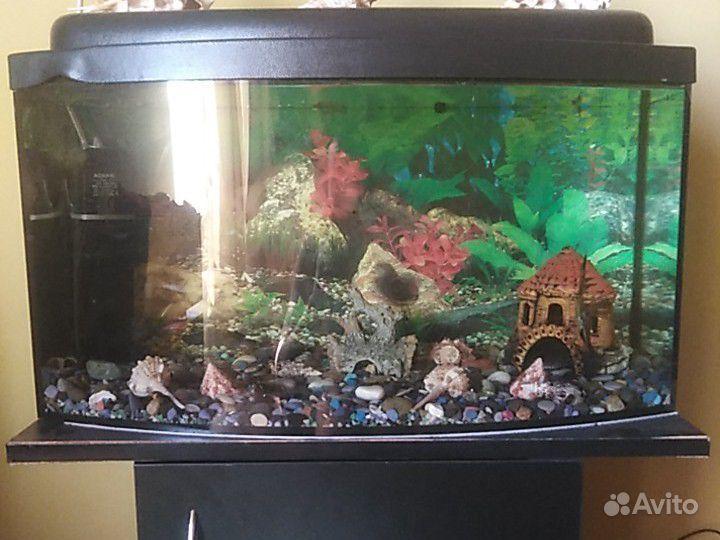 Аквариум с рыбами купить на Зозу.ру - фотография № 1