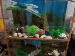 Акватеррариумы для красноухой черепахи