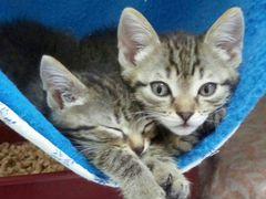 Милейшие котята девочки в Добрые руки