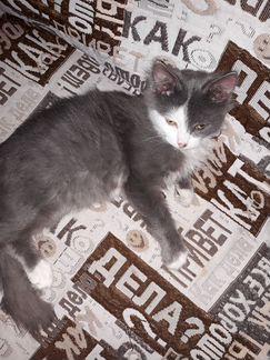 В добрые руки котенок (мальчик) 4 месяца. К лотку