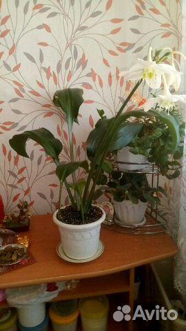 Красноярск цветы комнатные