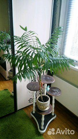 всё переменчива купить растения на авито москва нет ограничениям