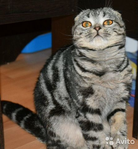 большая глубина, котята на авито нефтеюганск вакансии: Новогодняя