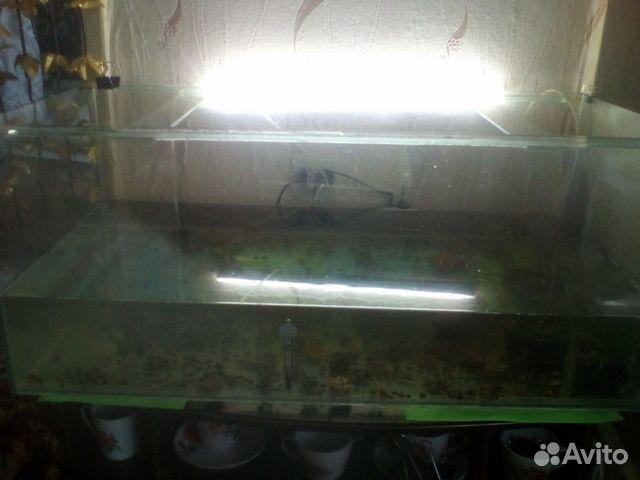 купить аквариум ангарск объявления