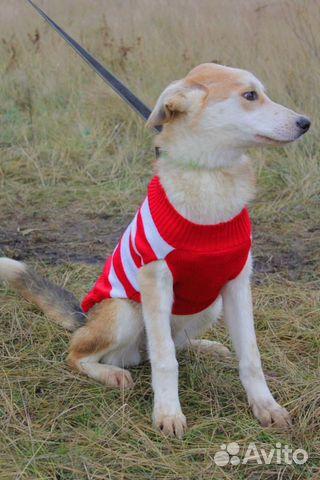 Милашка Собака подросток Эви в дар купить на Зозу.ру - фотография № 7