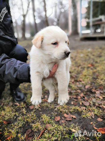 Сахарочек купить на Зозу.ру - фотография № 5