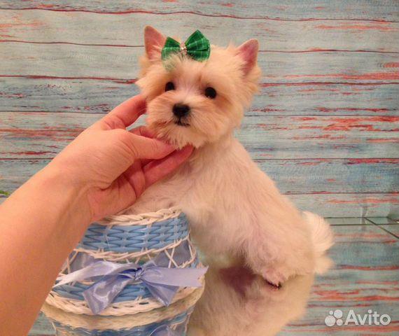 Кукольный белый супер мини мальчик купить на Зозу.ру - фотография № 7
