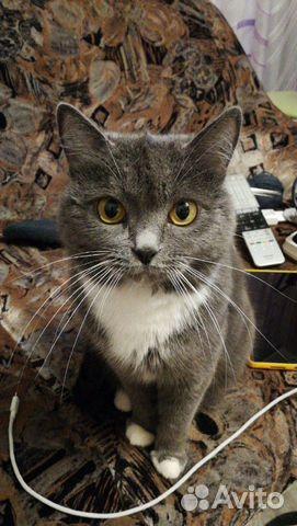 Кошка 89297048486 купить 1