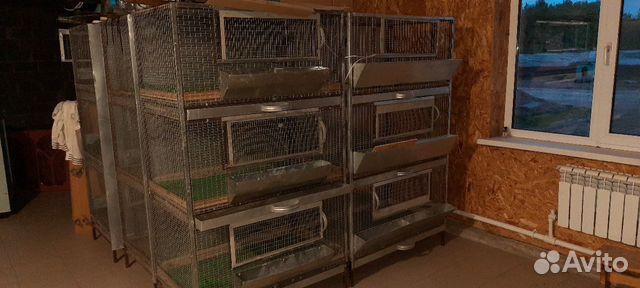 Клетки для птенцов 89171391861 купить 1