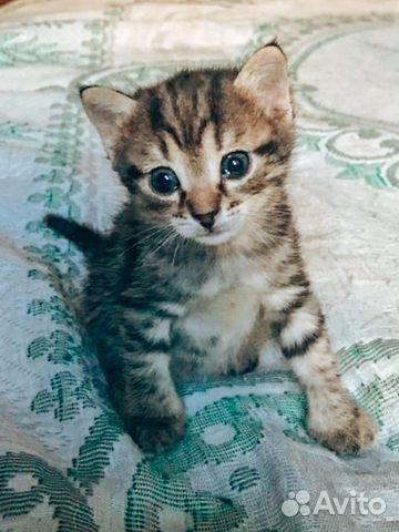 Котята рожд. 25.06  купить 2