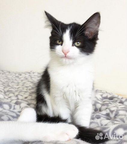 Ищу дом для котенка  89219446280 купить 2
