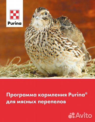Комбикорм Пурина для перепелов  89782699577 купить 2