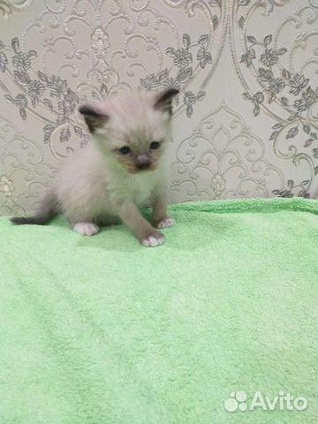 Продам Невско-Маскарадных котят