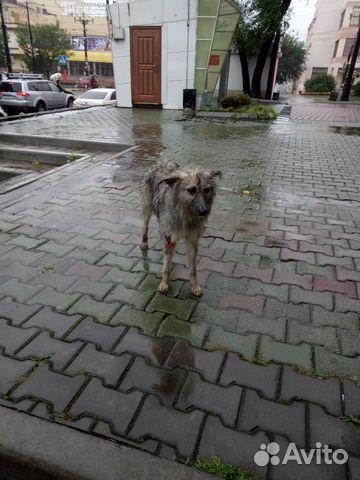 Волонтеры отзовитесь Собака со сломанной лапой