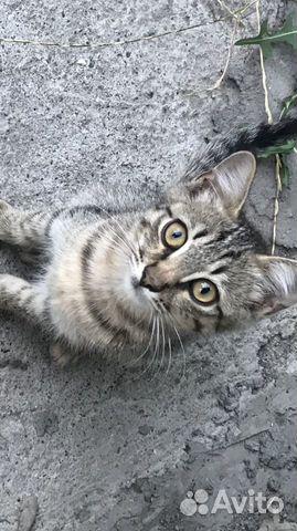 Котенка в добрые руки  89888757733 купить 2