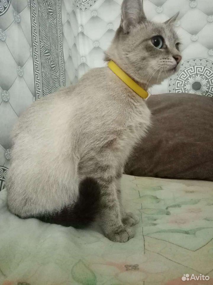 Кошка 89504062451 купить 1