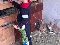 Продам крольчих