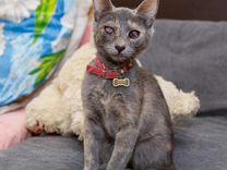 Особенный котёнок ищет дом — Кошки в Геленджике