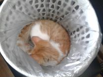 Котик-крысолов (4 мес)