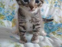 Отдам котёнка в хорошие руки (от кошки-мышеловки)