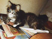 Прелестные котята
