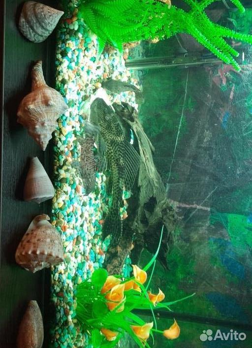 Catfish  89199368772 buy 1