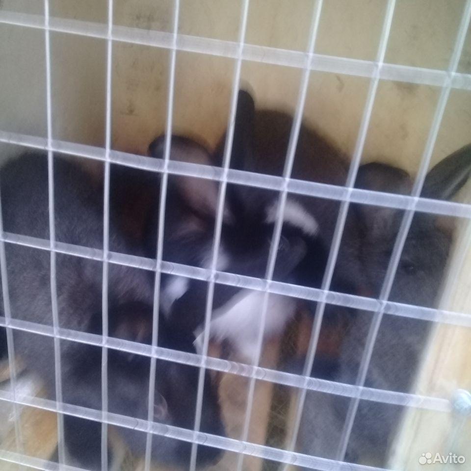 Rabbit  89780050198 buy 2