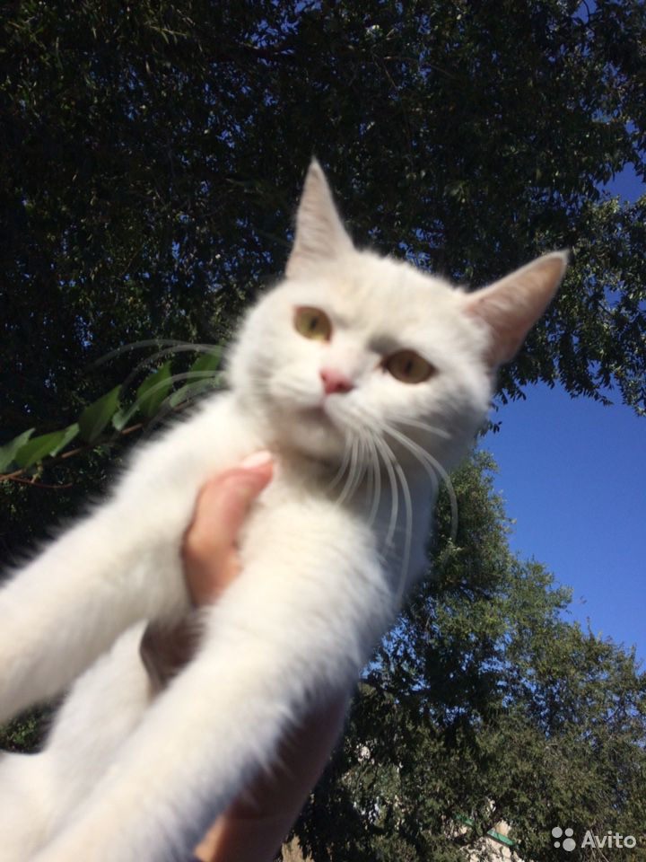 Кошка  89275054574 купить 2