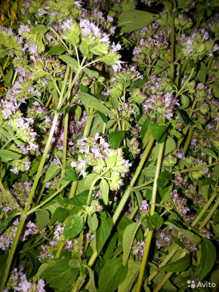 Растения садовые  89875767809 купить 9