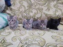 Отдам котяток
