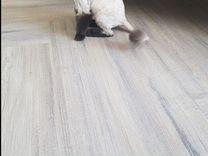 Кошечка красавица в добрые руки